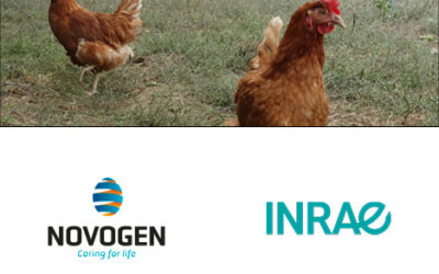 Genetic determinism of laying hens – a key to accompany the transition to cage-free farms