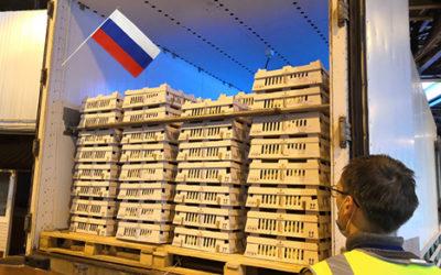 Development of NOVOGEN in Russian market