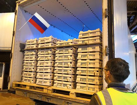 Desarrollo de NOVOGEN en el mercado Ruso